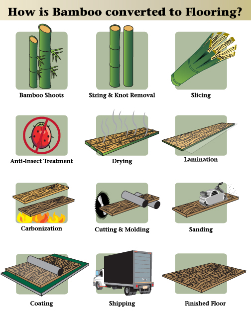 bamboo shoots are new growth from the universally abundant bamboo ...